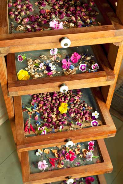 screen racks used to dry flower heads inside cottage style garden shed used as bonus room
