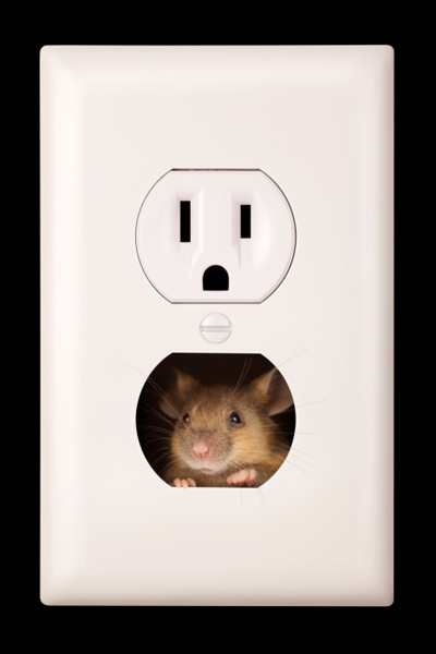 mouse in electrical wall outlet, fast fixes