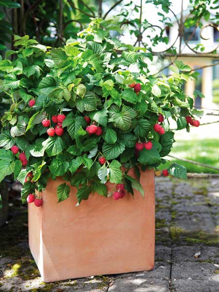 Outdoor Living: Fresh fruit, hold the trellis  from the TOH Top 100 Best New Home Products 2013