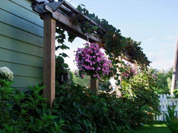 Michael Renno's flower- and grape-filled pergola next to the house in Fort Wayne, IN