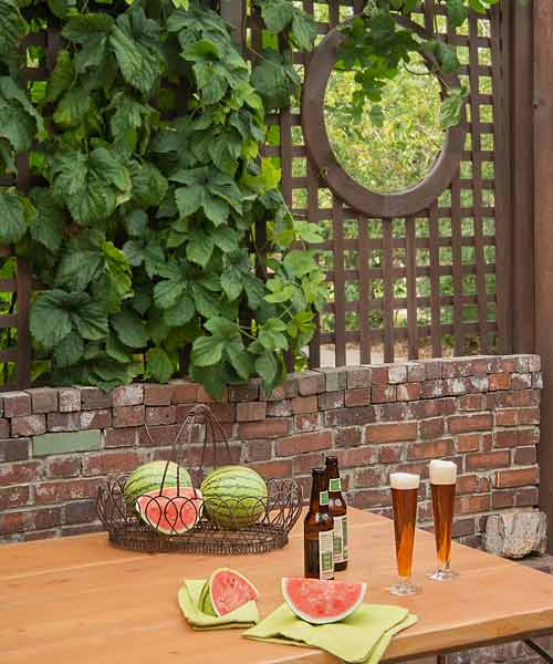 secret garden on urban plot beer garden with lattice and brick walls