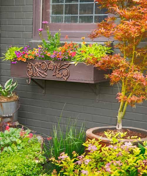 secret garden on urban plot window box with salvaged metal ornament, calbrachoas, Japanese maple, hosta in container