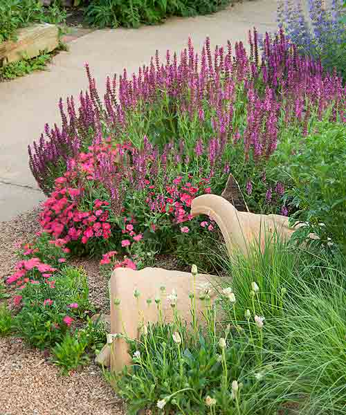 secret garden on urban plot dry garden bed with broken pots in soil, perennial flowers, pink friesland salvia, dianthus, white sun daisy