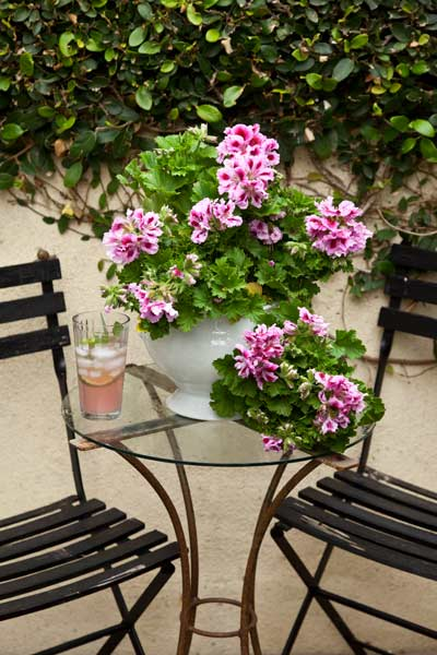 garden planning romantic garden bistro set on driveway with geraniums to make lemonade