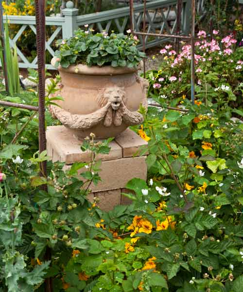 garden planning romantic garden lion's head pot container flowering strabwerries, boysenberries, nasturtiums, geraniums