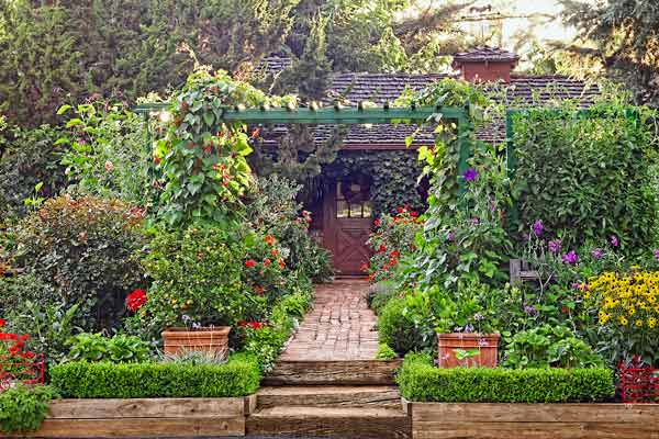 edible plant garden walkway with trellis tomatoes, scarlet runner beans