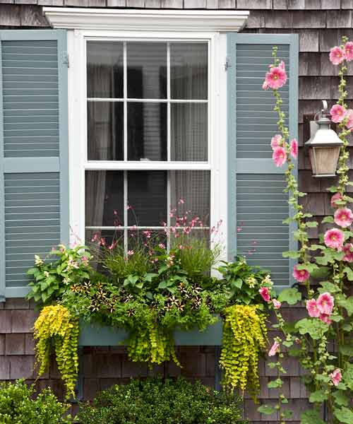 window box plantings with gaura, creeping Jenny, salvia, phantom petunia, diamond frost euphorbia