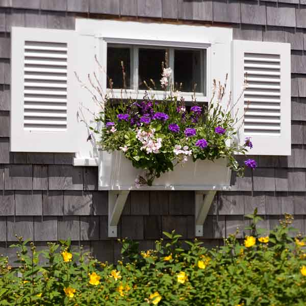 window box plantings with ivy geranium, verbena, guara, yellow flowering hedge