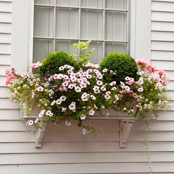 window box plantings with petunias, alyssum, geraniums