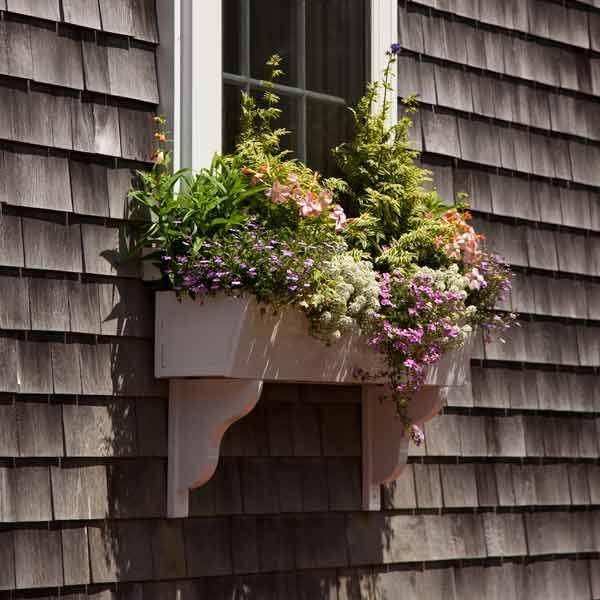 window box plantings with jacob's ladder, alyssum, penstemon, bacopa, lobelia, apple blossom nicotiana