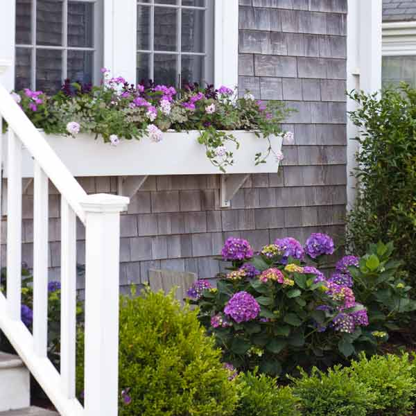 window box plantings with stonecrop, phlox, verbena, hydrangeas