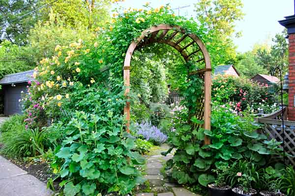 cottage garden with roses entry arbor with autumn sunset rose and hollyhocks after reader remodel contest 2013