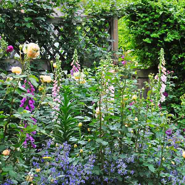 cottage garden with roses, pink foxglove after reader remodel contest 2013