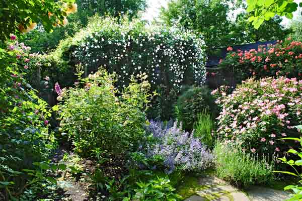 cottage garden with beds of herbs like catmint and lavender along stone paths after reader remodel contest 2013