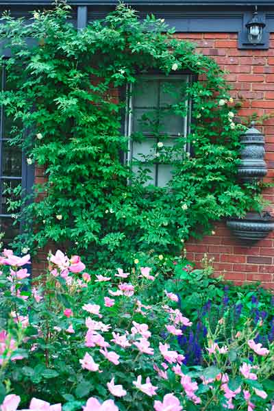 cottage garden with malvern hills rambling rose climbing brick facade after reader remodel contest 2013