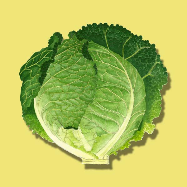cabbage, nutrient boosting vegetables to plant for fall