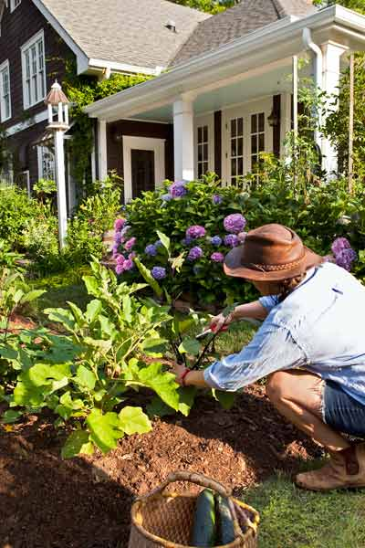 woman tending to vegetable garden in front yard, vegetable garden problems solved