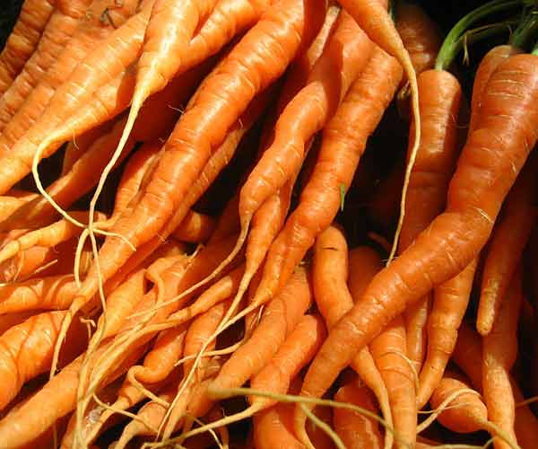 twisted and ugly carrots, vegetable garden problems solved