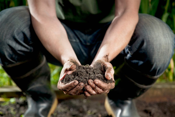 gardener with handful of soil, vegetable garden problems solved