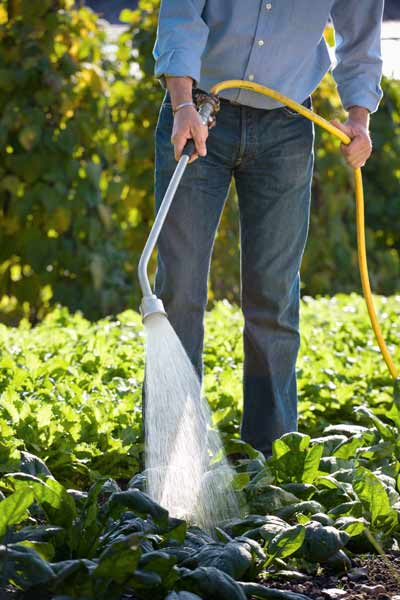 gardener watering soil, vegetable garden problems solved
