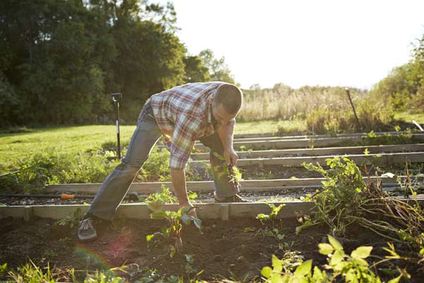 man tending to his vegetable garden, vegetable garden problems solved