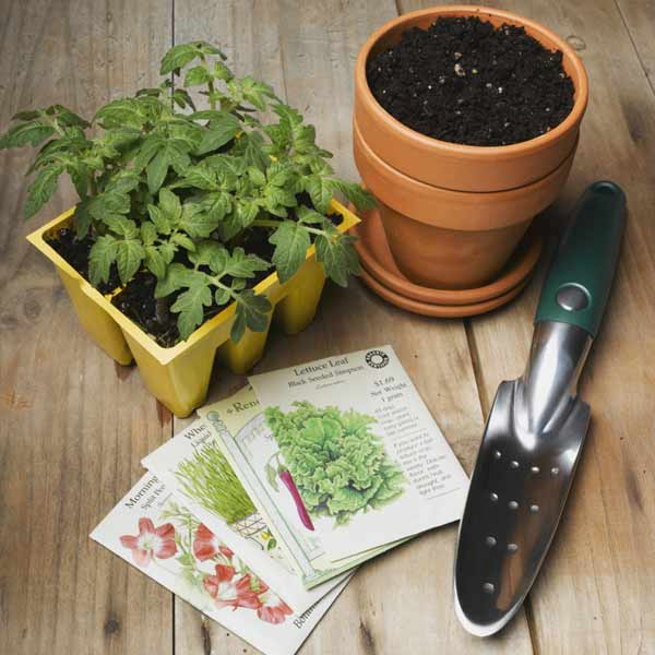 seed packs and gardening supplies, vegetable garden problems solved