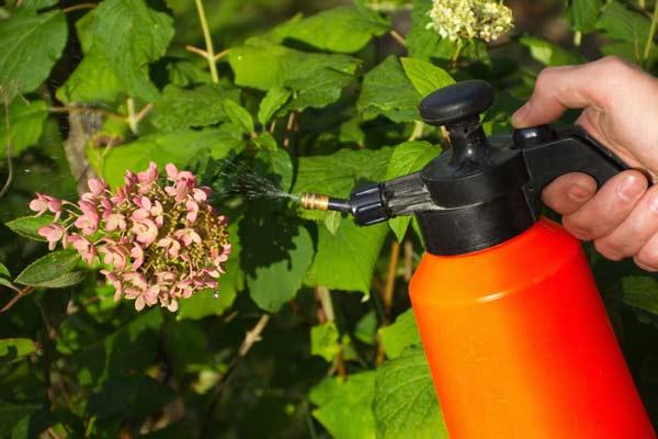 organic pesticides are healthier myth, gardening myths