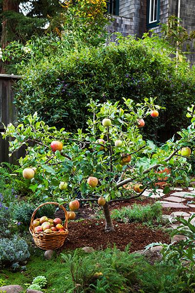fruit trees good fruit trees for backyard
