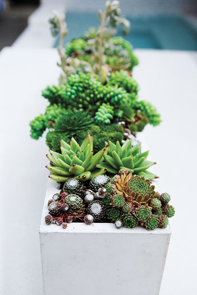 Succulents are a natural easy care low water container for Easy care shrubs front house