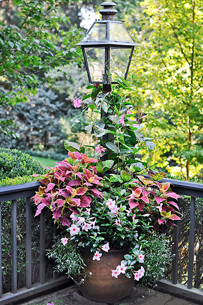 Round out a corner with a well placed container magical for Garden decking ornaments
