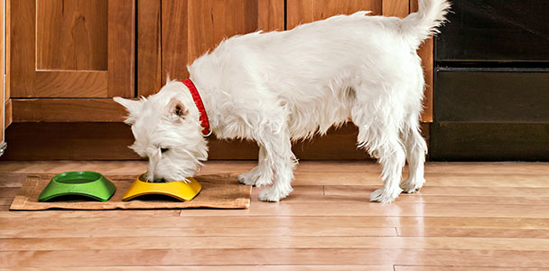 dog eating on a wood floor