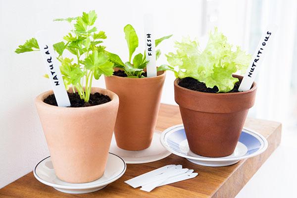 gardening vegetables in flower pots
