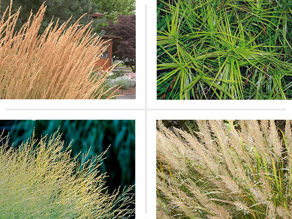 Prairie fillers 10 grasses for prairie style gardens for Mounding grass