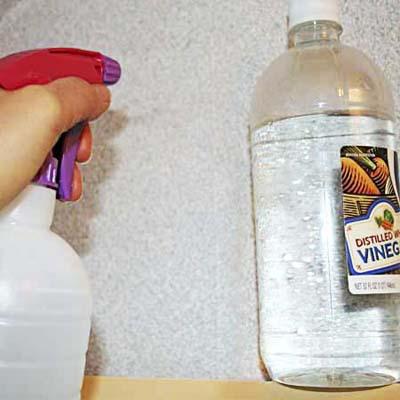 spraying vinegar on the wall