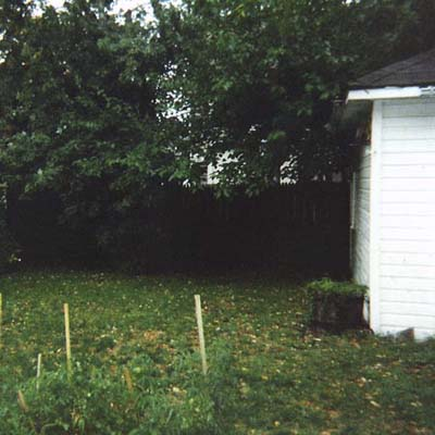 before photo of a small and overgrown back yard in Cleveland, OH