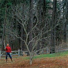 a man standing next to a tree that needs pruning