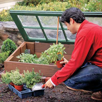 placing plants inside the cold frame