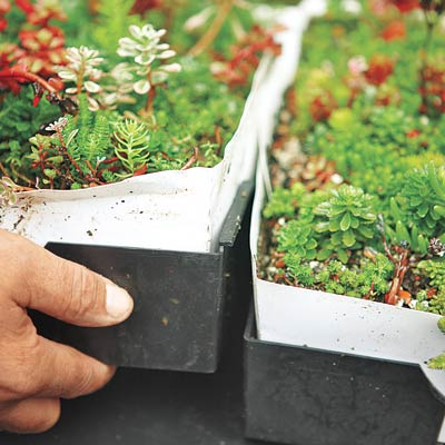 connecting planted trays on the roof using a modular plastic lip system
