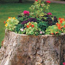 tree-stump planter
