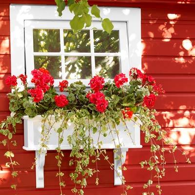 the newly installed windowbox