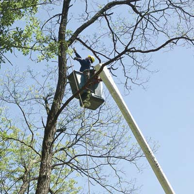 professional tree removal by arborists, step 1, roping and removal of limbs