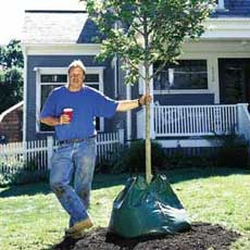 Planting a Tree tout
