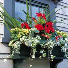 Hanging a Window Box tout