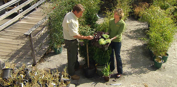 Roger Cook discusses the beauty and benefits of large-container planting