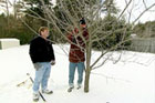 Pruning a fruit tree